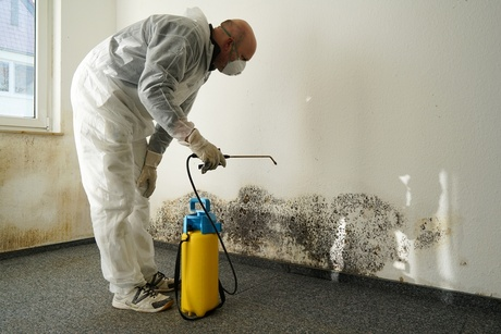 Mold Remediation & Testing